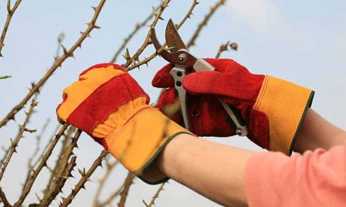 best gardening gloves for thorns