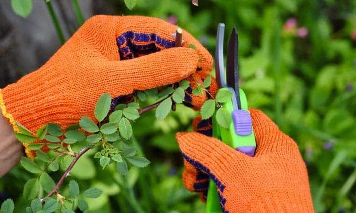 long-gardening-gloves